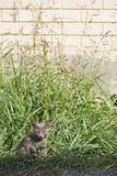 Petit chaton au bord de la route image libre de droits