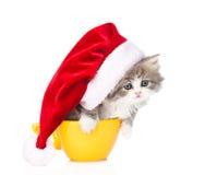 Petit chaton avec le chapeau rouge de Santa dans la grande tasse D'isolement sur le blanc Photographie stock libre de droits