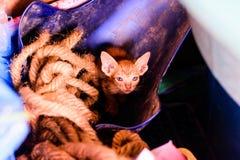 Petit chaton brun sur une pile de photographie stock