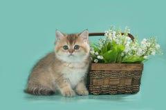Petit chaton dans la perspective d'un panier avec des lis de la vallée Photos libres de droits