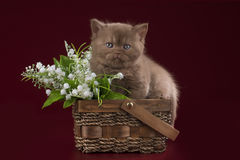 Petit chaton dans la perspective des fleurs de ressort Images libres de droits