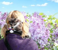 Petit chaton dans la sécurité Photographie stock libre de droits