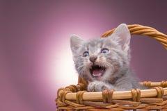 Petit chaton dans le panier Photographie stock libre de droits