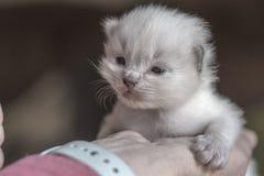 Petit chaton dans une main photos stock