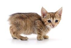 Petit chaton de Brown Photo stock