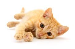 Petit chaton de Brown images libres de droits