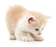 Petit chaton de Brown Photographie stock libre de droits
