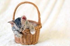 Petit chaton dormant dans le panier image libre de droits