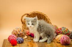 Petit chaton drôle avec une boule du tricotage Images libres de droits