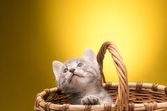 Petit chaton drôle Photos stock
