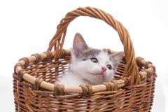 Petit chaton drôle Photo stock