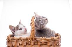 Petit chaton drôle Image libre de droits