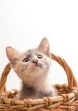 Petit chaton drôle Photo libre de droits