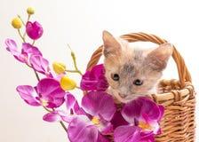 Petit chaton drôle Photographie stock libre de droits