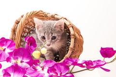 Petit chaton drôle Images stock