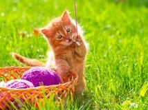 Petit chaton espiègle rouge avec une laine de fil sur le gra vert Photographie stock