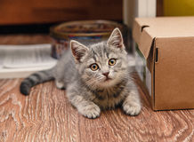 Petit chaton espiègle se reposant à côté de la boîte Photo stock
