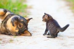 Petit chaton et grand chien Image libre de droits