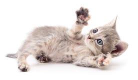 Petit chaton gris Photo libre de droits
