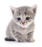 Petit chaton gris Images libres de droits