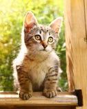 Petit chaton gris rayé sur les usines d'été Photo libre de droits