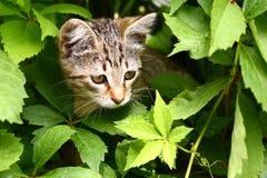 Petit chaton gris rayé sur les usines d'été Image libre de droits