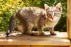 Petit chaton gris rayé sur les usines d'été Images stock
