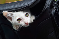 Petit chaton hors de sac d'appareil-photo Image stock
