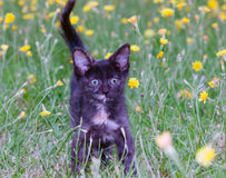 Petit chaton maladroit sur photo stock