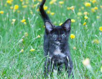 Petit chaton maladroit sur photos stock