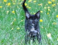 Petit chaton maladroit sur photos stock
