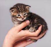 Petit chaton mignon image stock