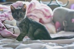 Petit chaton mignon image libre de droits