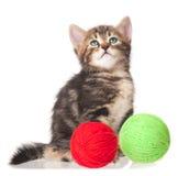 Petit chaton mignon Photographie stock