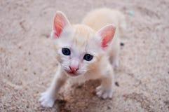 Petit chaton mignon Photo libre de droits