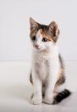 Petit chaton mignon photos libres de droits