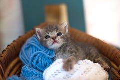 Petit chaton mignon dans un panier avec des fils pour le tricotage Images libres de droits
