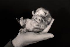 Petit chaton mignon nouveau-né Image libre de droits