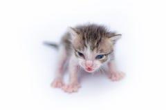 Petit chaton mignon sur le blanc Photos stock