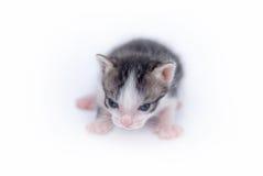 Petit chaton mignon sur le blanc Image stock