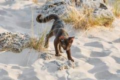 Petit chaton noir Photos libres de droits