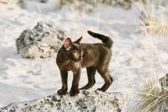 Petit chaton noir Images libres de droits