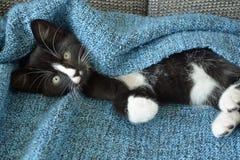 Petit chaton noir et blanc doux de cheveux courts dormant et jouant dans une couverture domestique bleue Images stock