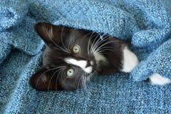 Petit chaton noir et blanc doux de cheveux courts dormant et jouant dans une couverture domestique bleue Image stock