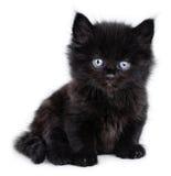 Petit chaton noir s'asseyant Photos libres de droits