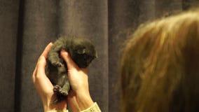 Petit chaton nouveau-né mignon Fin vers le haut 4K banque de vidéos
