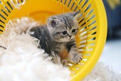 Petit chaton parmi les plumes blanches Photos stock