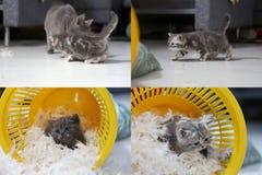 Petit chaton parmi les plumes blanches, multicam, écran de la grille 2x2 Photo stock