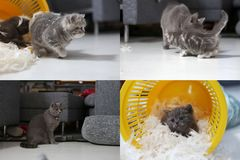 Petit chaton parmi les plumes blanches, multicam, écran de la grille 2x2 Photos libres de droits