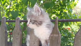 Petit chaton pelucheux Photo stock